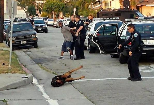 hawthorne-police-dog